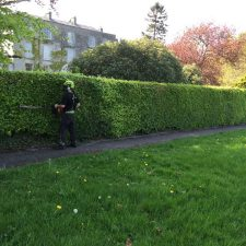 Elite Tree Services | Hedge Maintenance