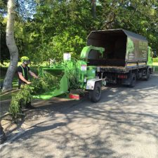 Elite Tree Services | Site Clearance