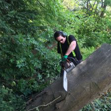 Elite Tree Services | Tree Removal