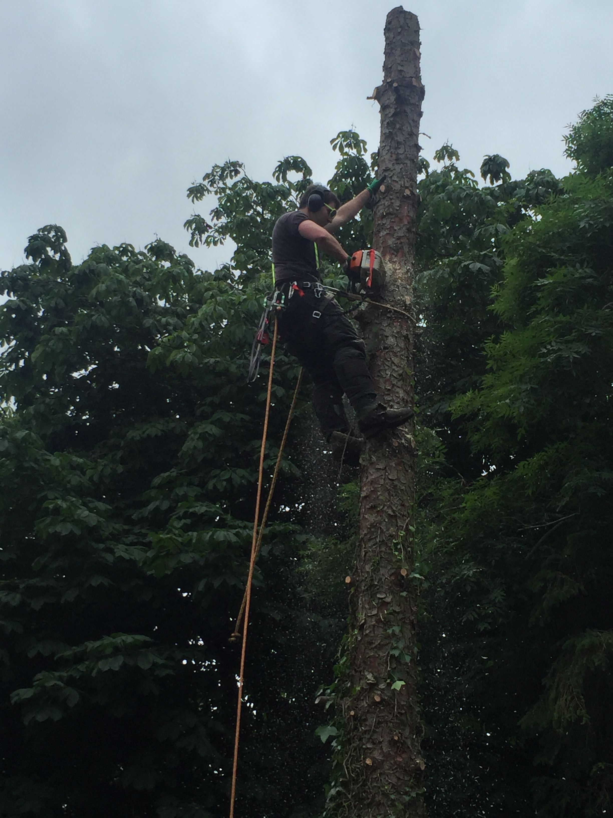 Elite Tree Services -Tree Removal
