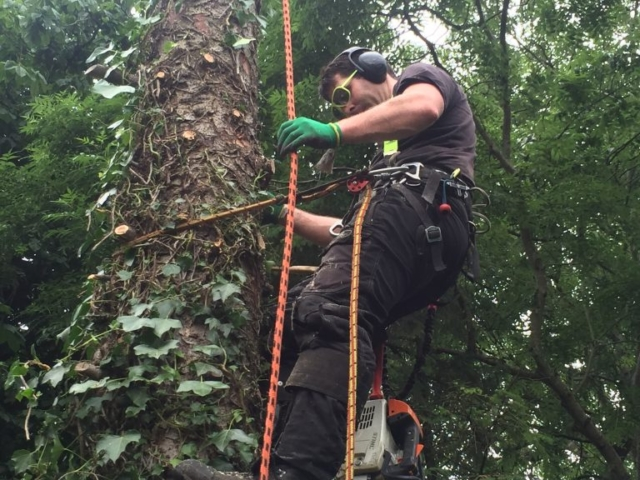 Elite Tree Services - Tree Removal