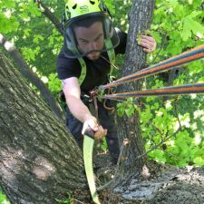 Elite Tree Services | Tree Surgery